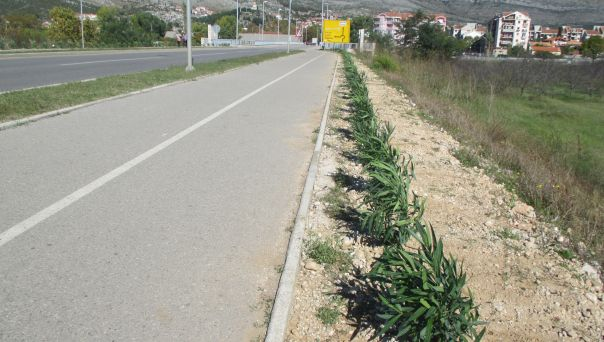 130 oleandera krase južnu obilaznicu