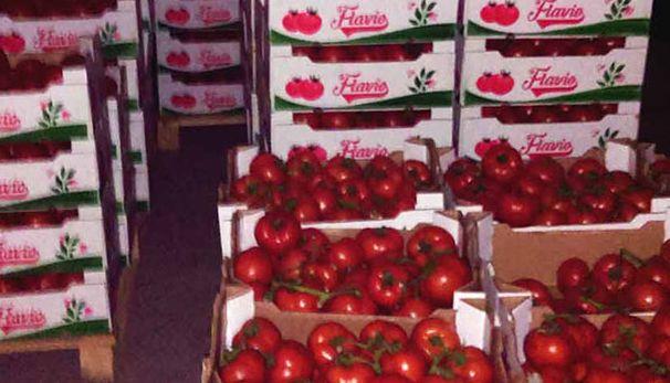 paradajz-trebinje