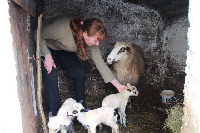 У селу Вратковићи овца ојагњила четворо