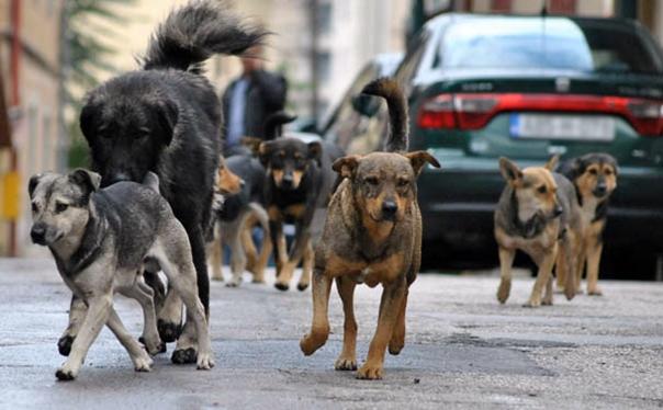 Требињска рјешења за псе луталице:  ОД СТЕРИЛИЗАЦИЈЕ И ЧИПОВАЊА - ДО ИЗВОЗА У ЕВРОПСКУ УНИЈУ