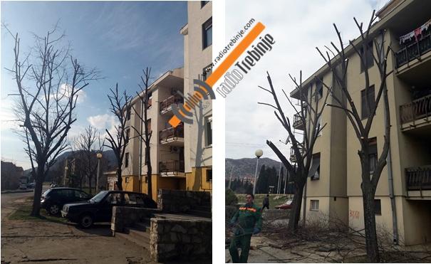 Орезивање дрвећа кренуло од насеља Тини и Горица