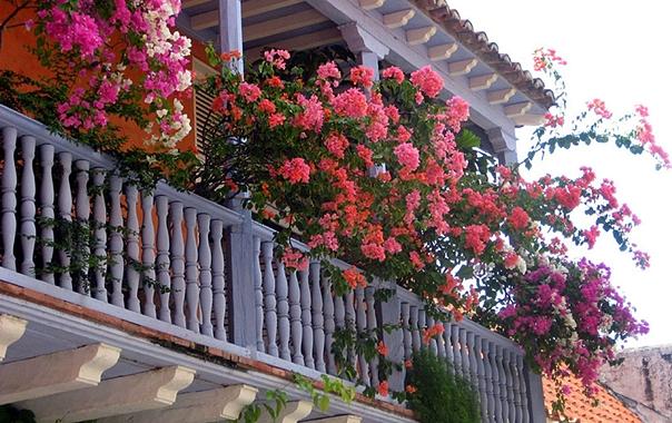 Требиње бира и награђује најљепше уређено двориште и балкон