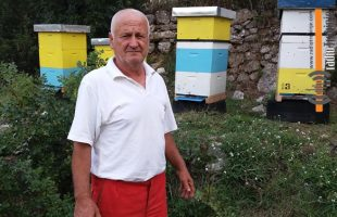 Feljton – pčelarske porodice (3): SAMO JAKA DRUŠTVA DONOSE MED