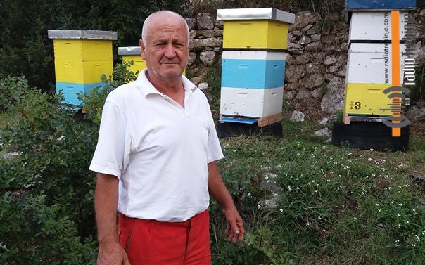 Фељтон – пчеларске породице (3): САМО ЈАКА ДРУШТВА ДОНОСЕ МЕД