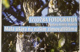 """Najava: Izložba fotografija """"Mala sova ušara na našim zimovalištima"""""""