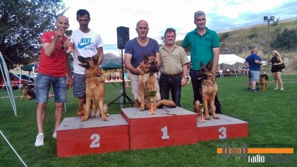Кад живот прерасте хоби: Њемачки овчар пас без премца