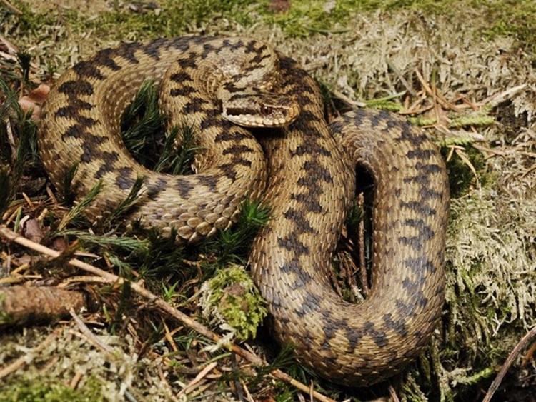 Мароканца ујела змија у Херцеговини