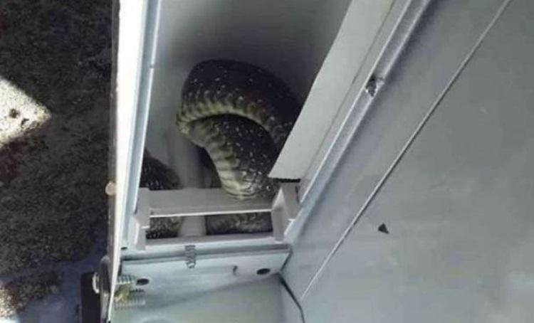 Требињка у фрижидеру нашла змију
