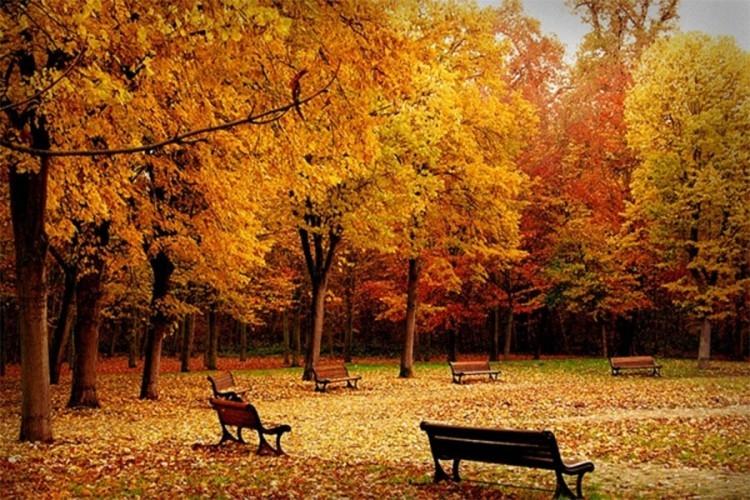 jesen.jpg (273 KB)