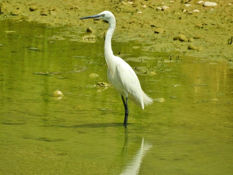 Тема јутра: Птице на нашем подручју (АУДИО)